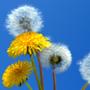 Allergia-megelõzés otthon